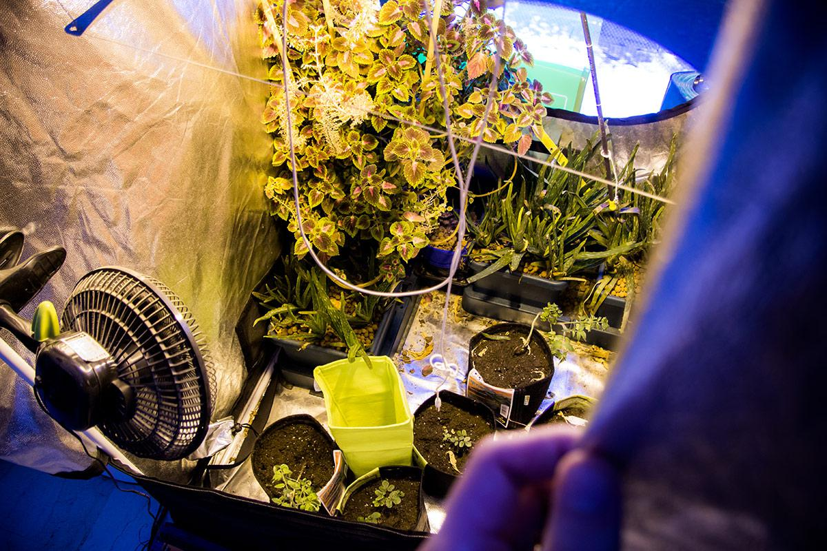 καλλιεργητές βιολογικής καλλιέργειας που χρονολογούνται